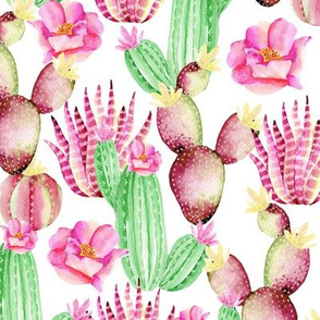 Watercolor succulents. White pattern