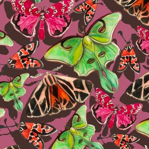 pink and grey moths