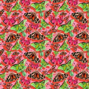 pink moths