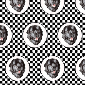 checkerboard newfy portrait