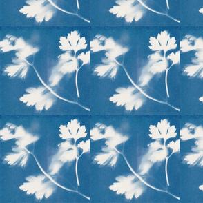 4x4 Sunprint 3016 fern