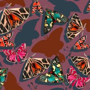 missing moths
