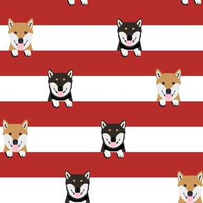 shiba inu mixed coats stripes dog breed pet fabric red