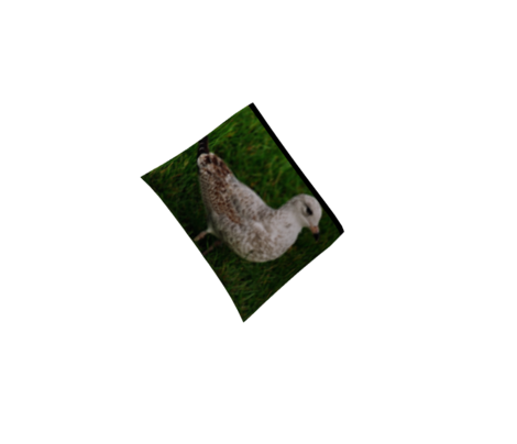 KRLGFP2010-SeagullFeathers2-mirror