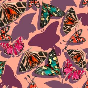 peach missing moths