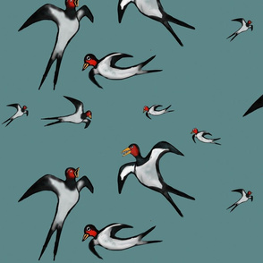 Birdy freedom