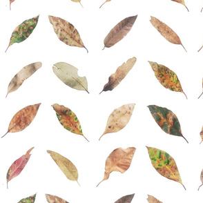 Chevron Leaves