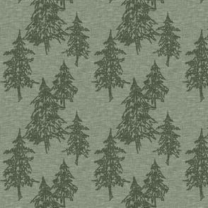 Small evergreen trees - fern