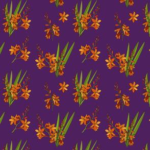 Montbretia scatter repeat purple