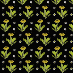 Dandelion repeat black