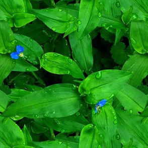 photorealistic ground cover