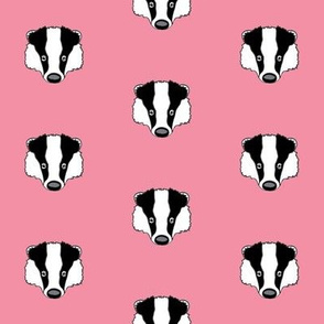 badger faces on pink