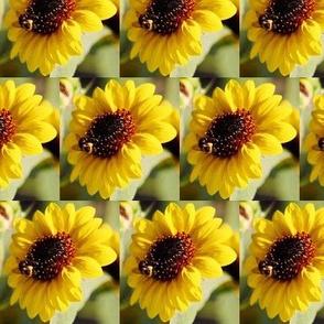 KRLGFP-BumbleBee3014-HALFBRICK