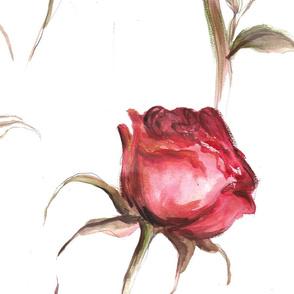 Mauve Roses
