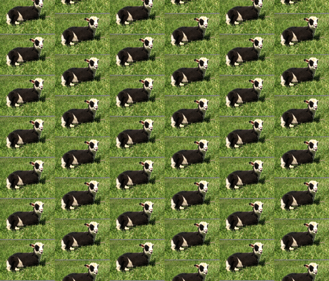 Lovey Lambs fabric by babsdesign3 on Spoonflower - custom fabric