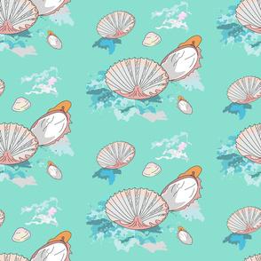 Adriatic sea shells