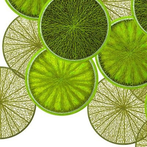 Limes by Su_G