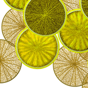 Lemons by Su_G