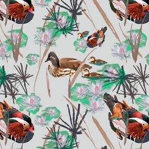 Mandarin Ducks Pond