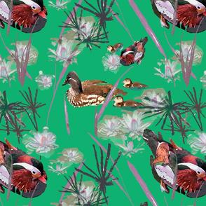 Mandarin Ducks Pond green