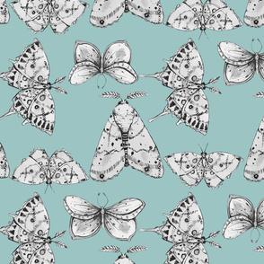 Moths: Dusty Blue