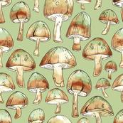 Forrest Mushrooms