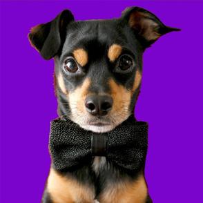 Top Dog in Purple