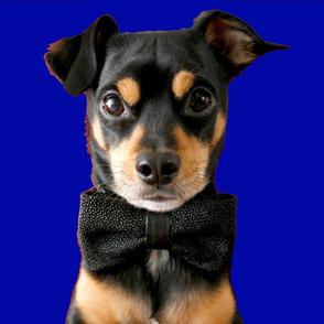 Top Dog - Blue