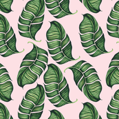 Banana Leaves on Pink Background