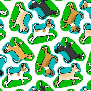 50s Style Chihuahuas in Blue and Green
