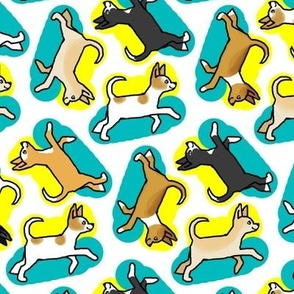 50s Style Chihuahuas in Blue and Yellow