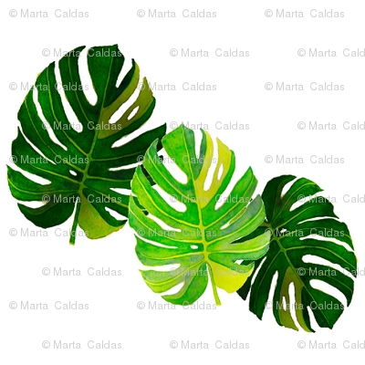 Watercolor Monstera leaves 2