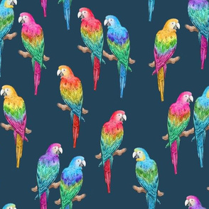 Rainbow Macaws on navy