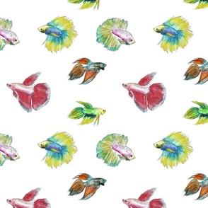 Watercolor Betta Fish
