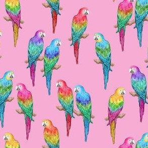 Rainbow Macaws on pink