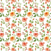 Peach Roses  watercolor(101)(300)