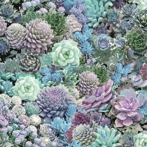 succulents soft blues