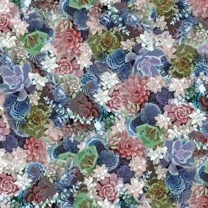 succulents pink blue