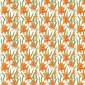 day lily on white 4x4