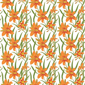 day lily on white 6x6
