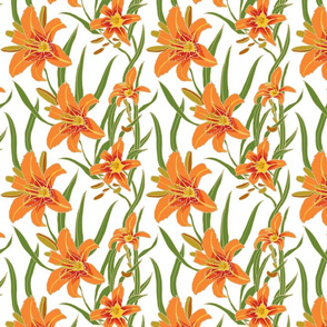 day lily on white 8x8