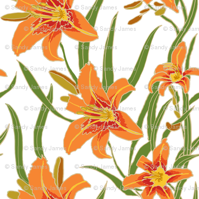 day lily on white 12x12