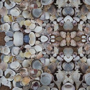Cape Cod Seashells