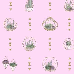 Geometric Succulents - Main Pink