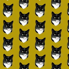 mitsey the tuxedo cat