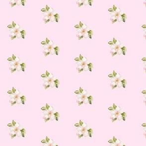 Katja Blossom