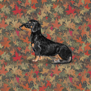 Black and Tan Dachshund for Pillow