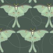 luna moth pattern XLG