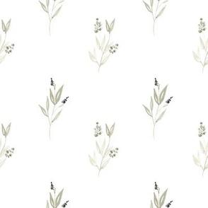 Eucalyptus & Greenery