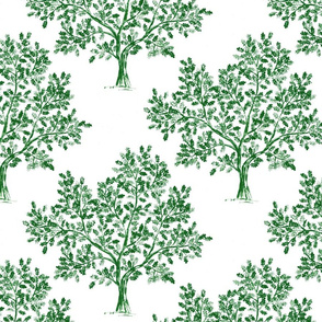 Oak tree (Emerald Green)